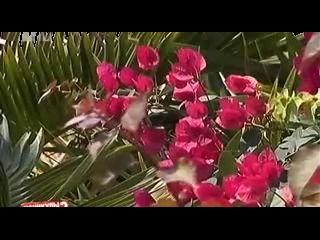 Каникулы в Мексике 2: День 89 (05.07.2012). Разборки на вилле